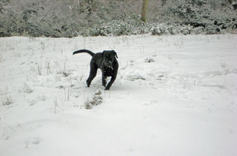 A puppy's first snow