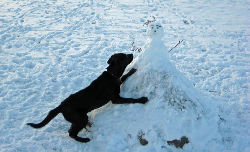 Tilly and the snowman