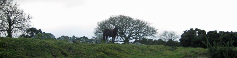 Ponies near Scorhill 2009