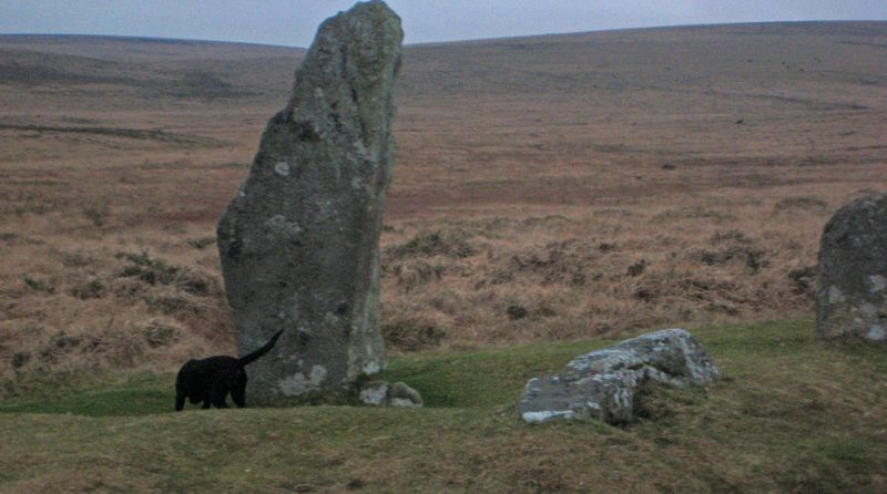 Dog with standing stone