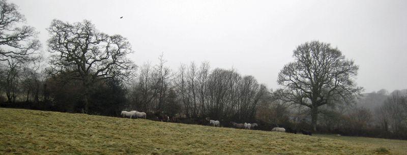 Dartmoor Ponies 3-10 f