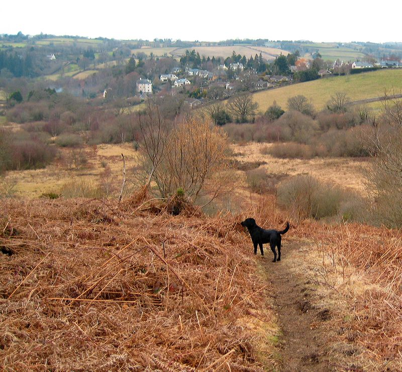 Tilly in the bracken