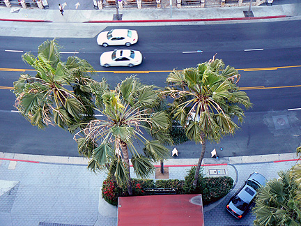 View straight down onto sunset blvd