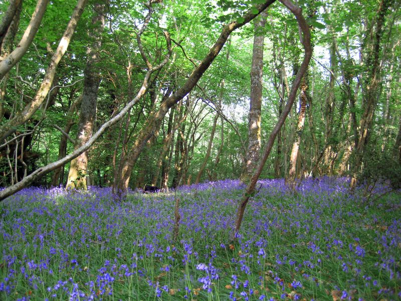 England spring