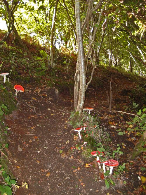 Toadstools on the path