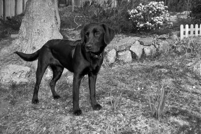 Tilly April 2010