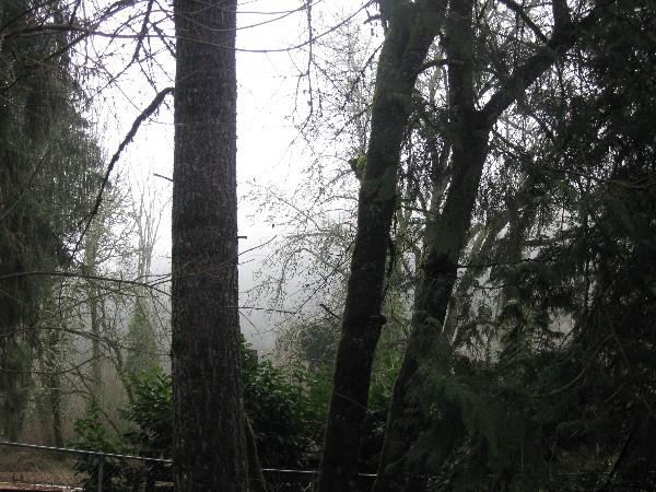 Foggy1