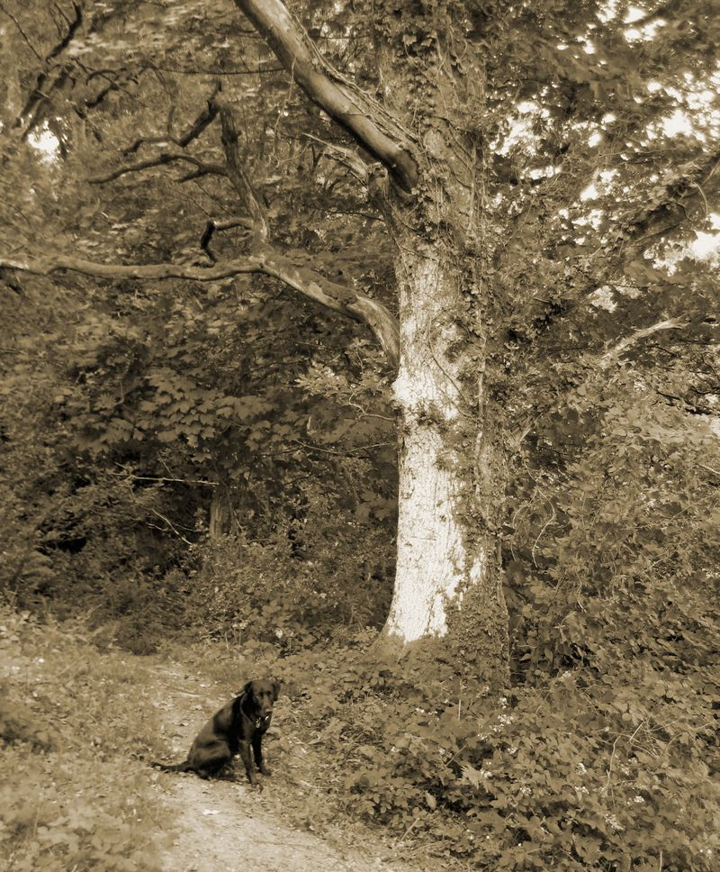 Tilly & the tree 4
