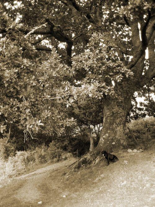 Tilly & Tree Summer