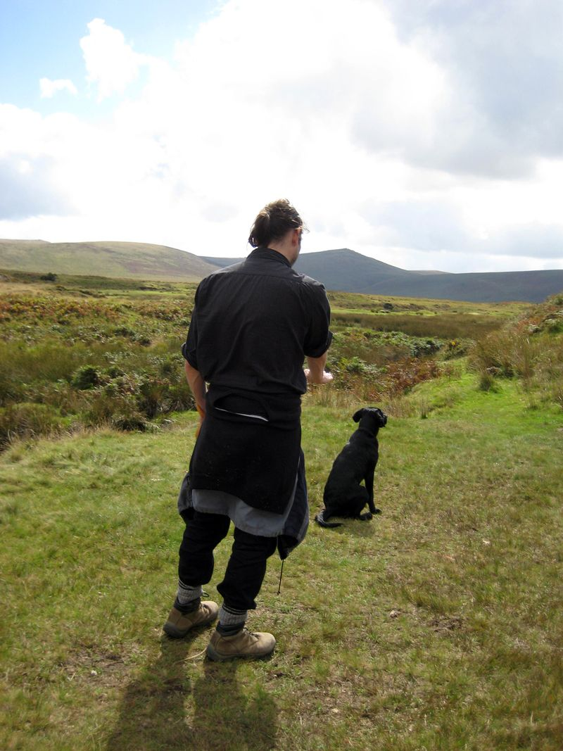 Sheep training