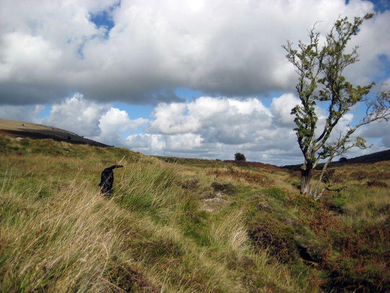 The Dartmoor hills
