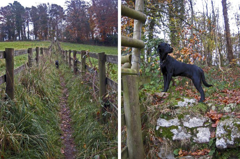 Tilly November 2010