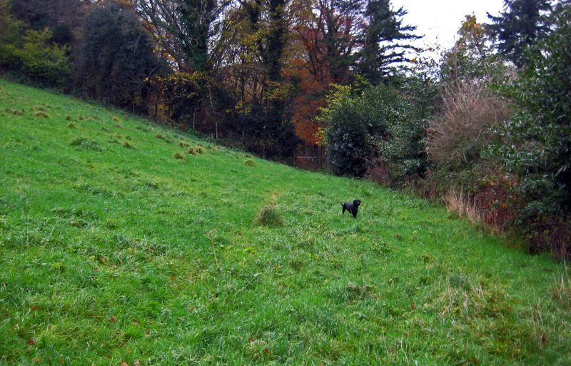 Tilly in autumn