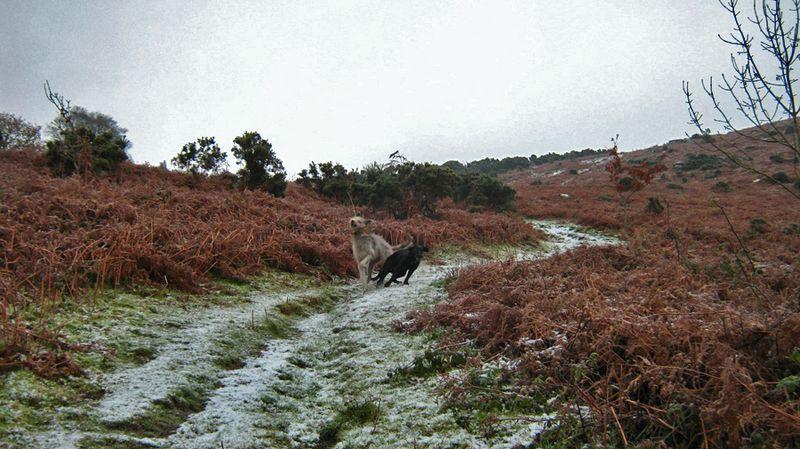 Tilly & macha in snow 2