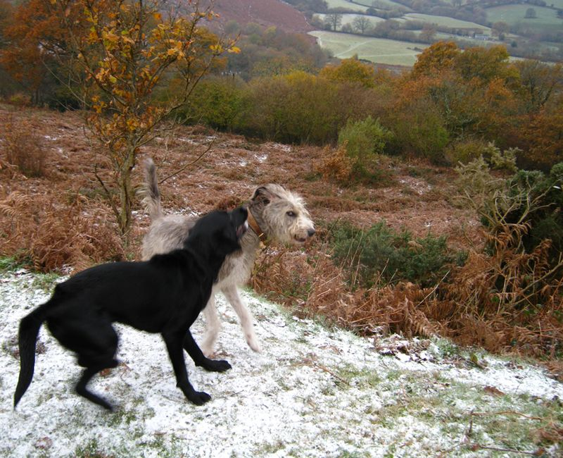 Tilly & macha in snow 3