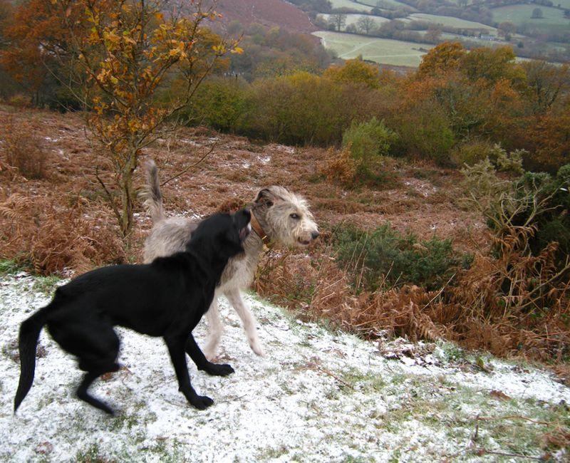Tilly & macha in snow 3