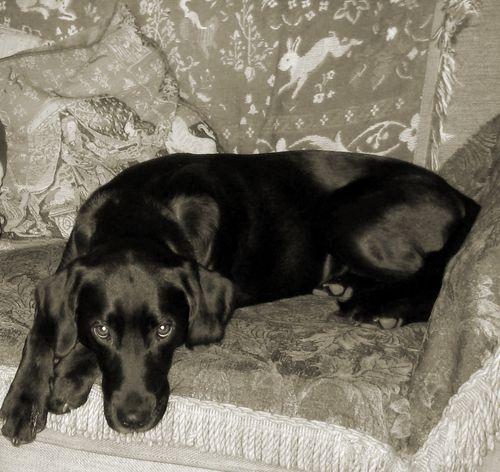 Tilly December 2010