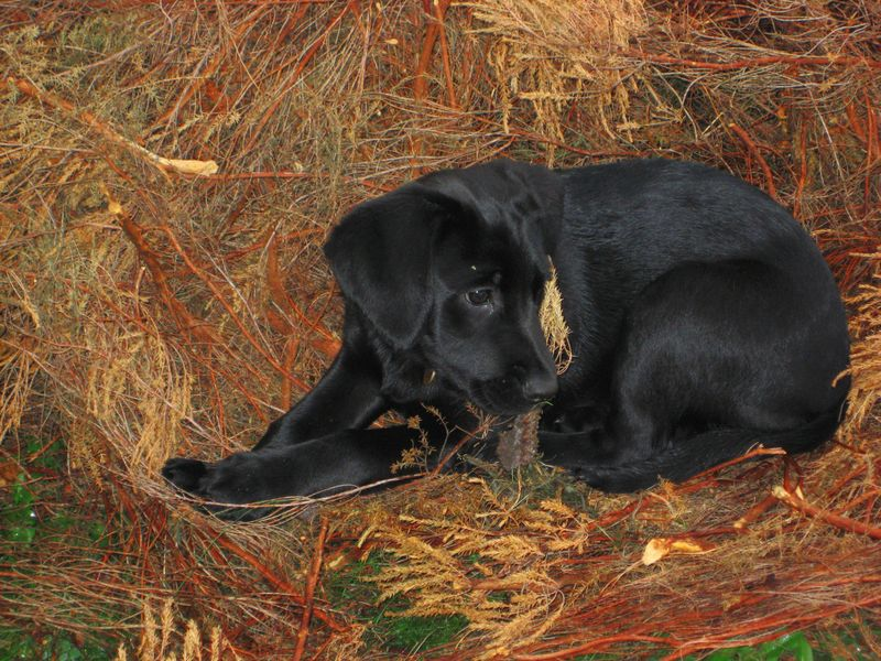Tilly in the bracken 2