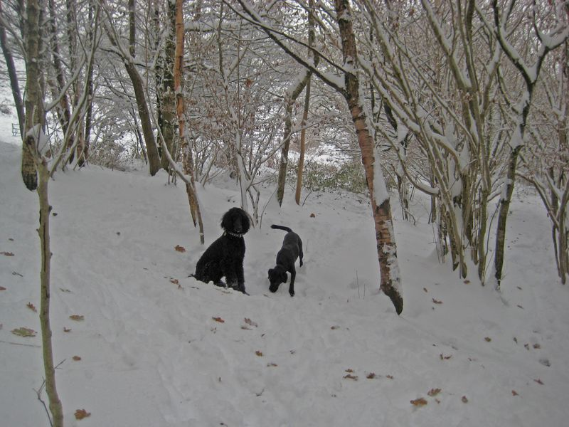 Dogs in a winter wood