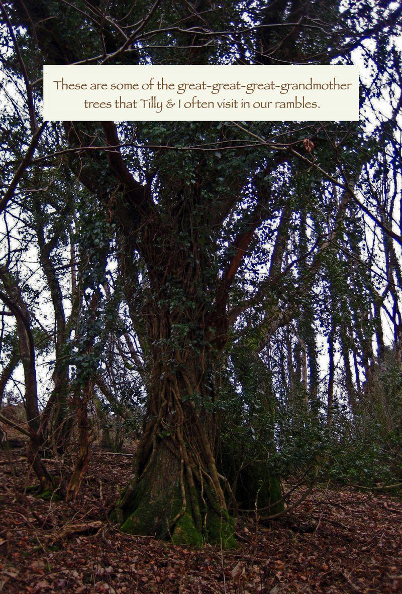 Tree Elders
