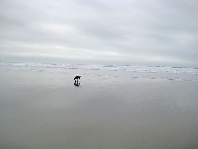 Small pup on big beach