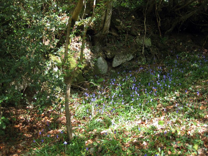 Bluebells and stone
