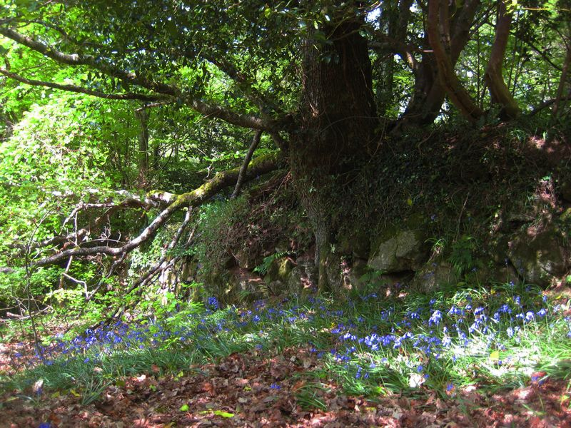 Bluebell wood boundary line
