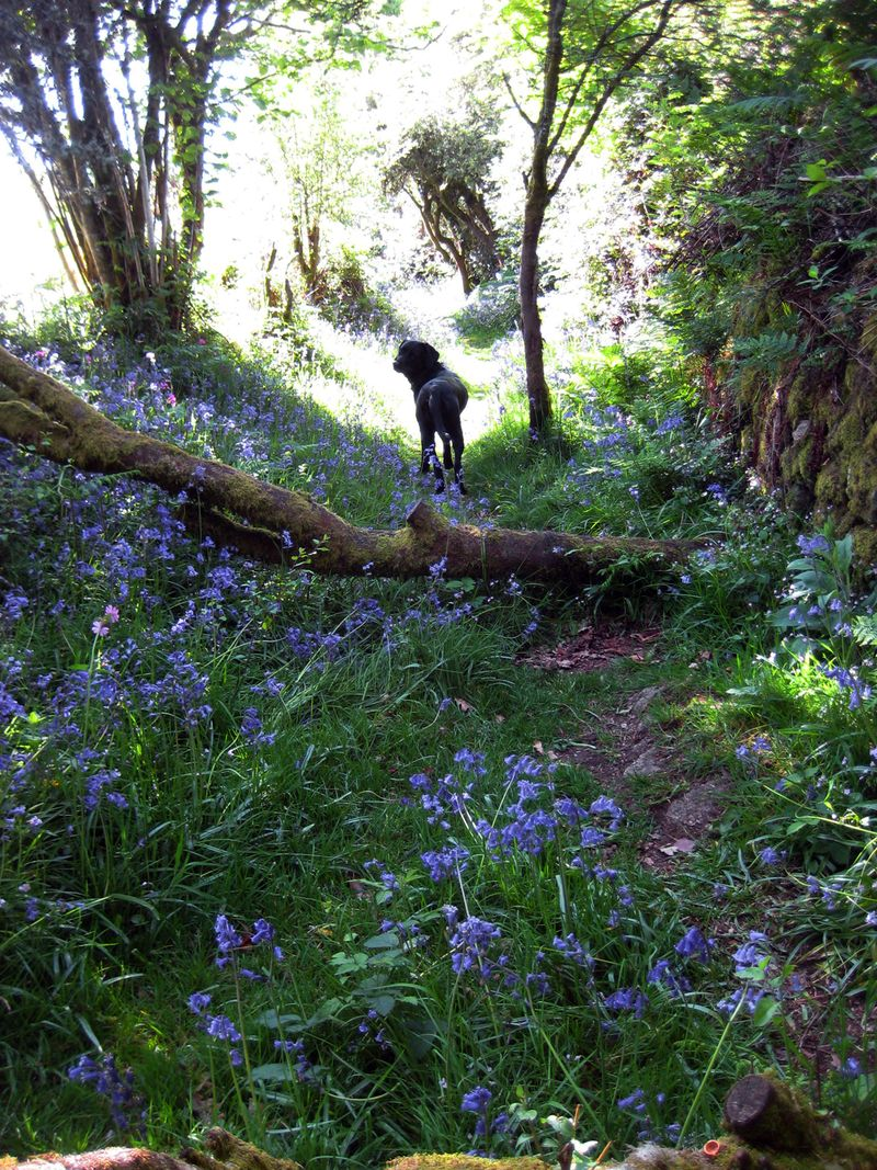Bluebell hill 14