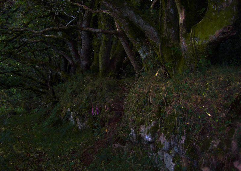 Woodland at daybreak