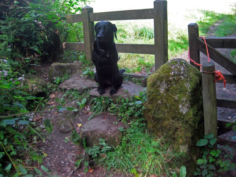 Tilly at the Stile