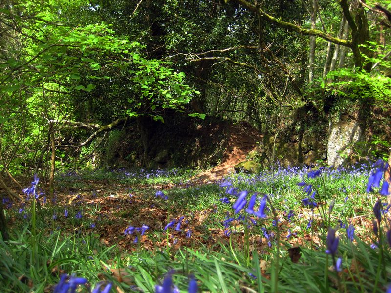 At the edge of the bluebell wood