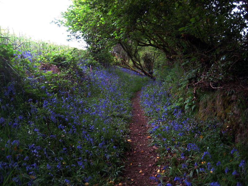 Bluebell hill 12