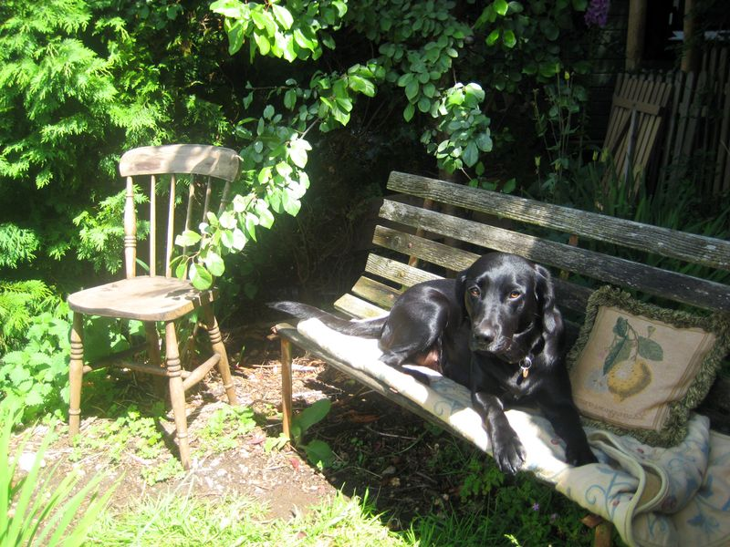 Tilly in the studio garden