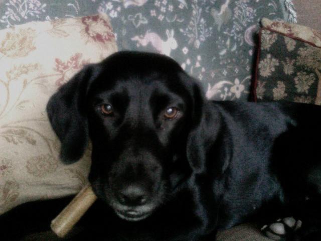 Tilly's cigar