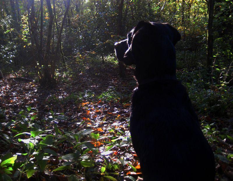 Autumn woods2