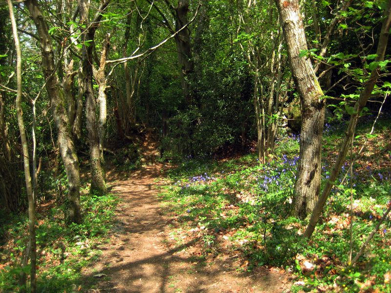 Approaching the bluebell wood.