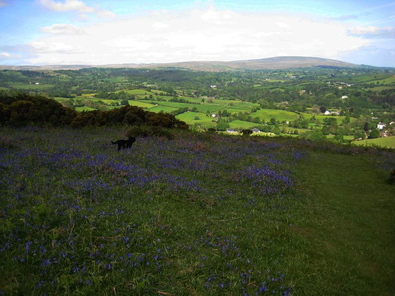 Bluebell hill 4