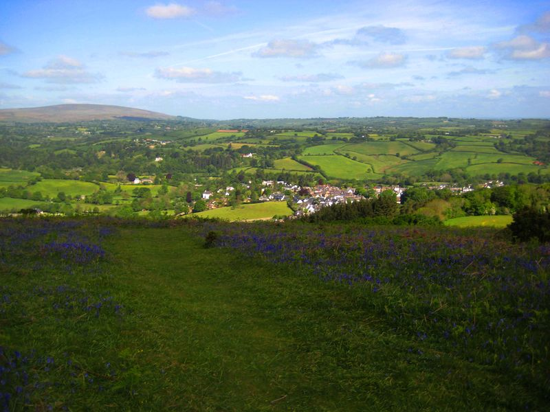 Bluebell hill 5