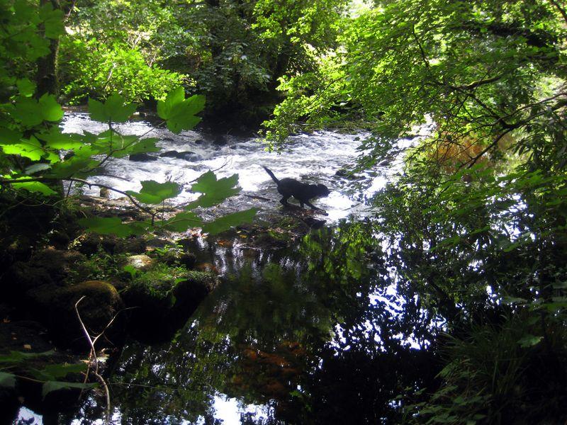 Rapids 3