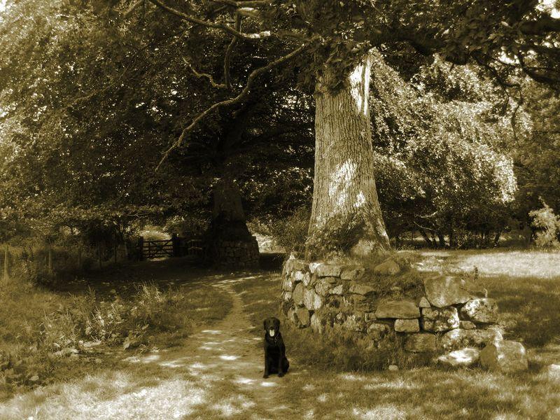 Dog, stone, tree 2