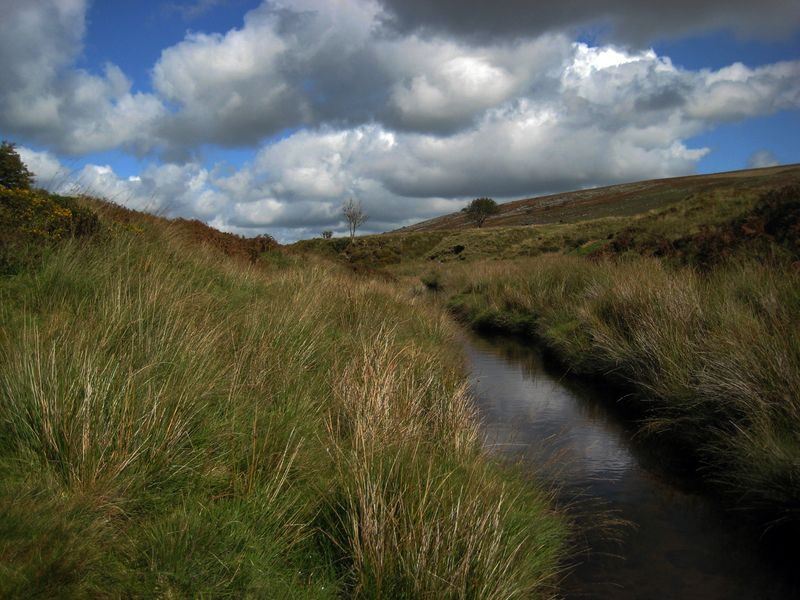 Dartmoor stream