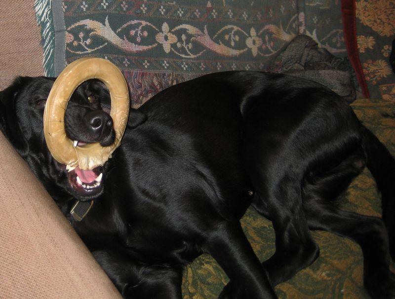 Rawhide doughnut