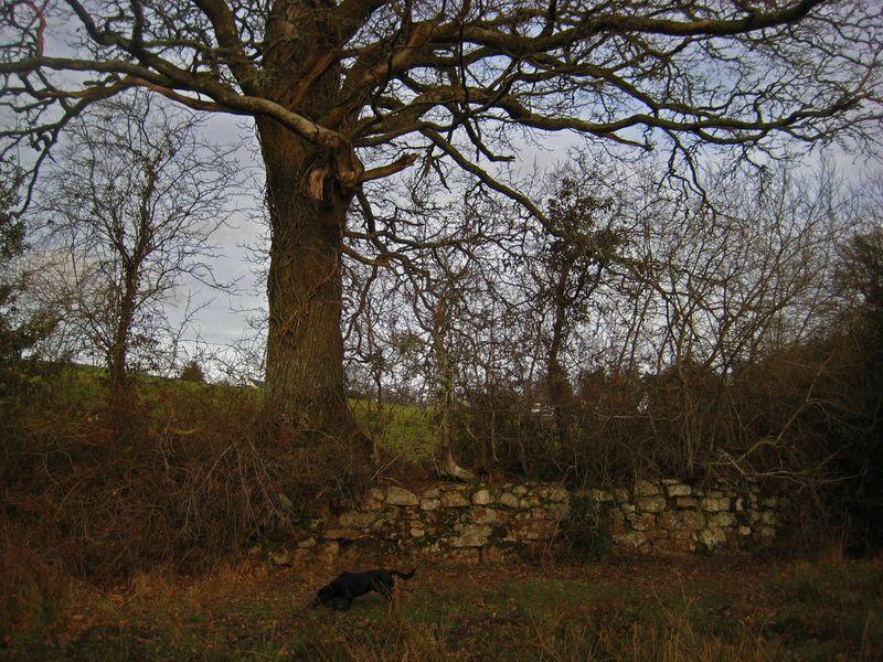 Tree, stone, and little black dog