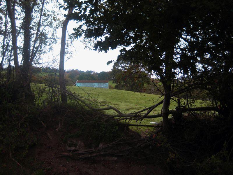 Blue barn in a Devon field