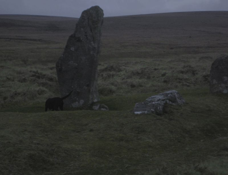 Tilly and the standing stone at dusk