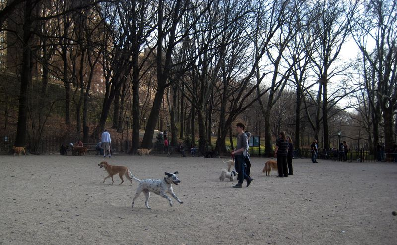 Riverside Dog Park 2