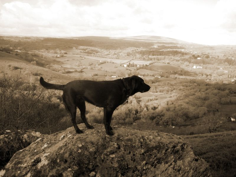 Tilly on the look-out