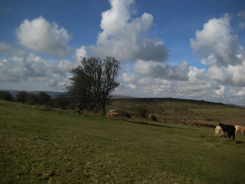 Spring on Dartmoor