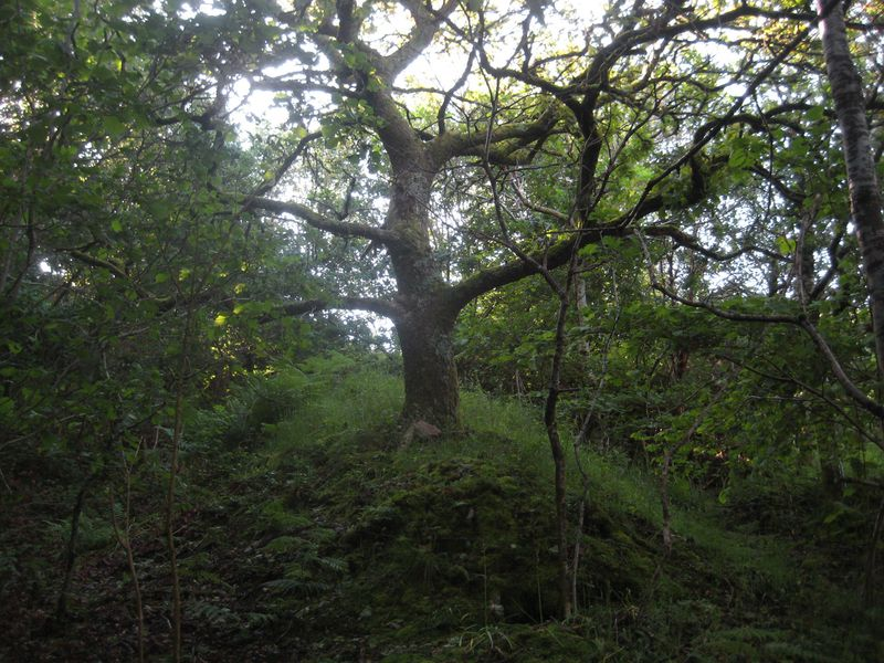 The Faery Tree
