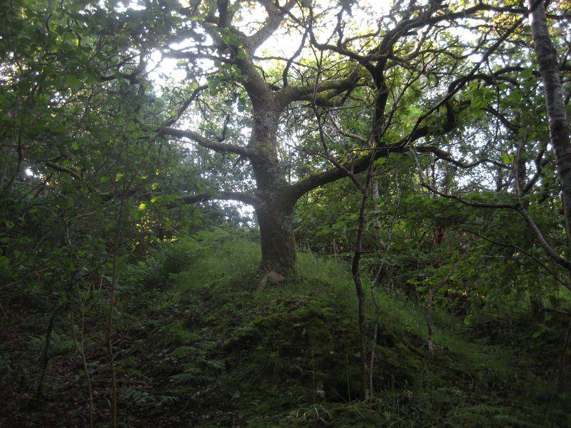 The Faery Tree